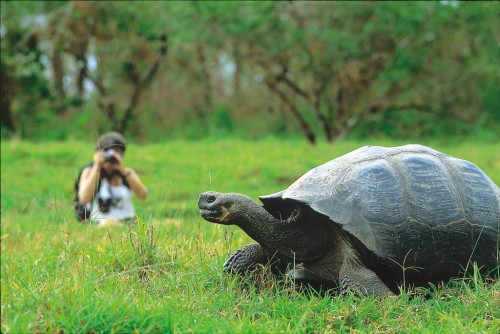 This could be me in September, taking pictures of giant tortoises! (Photo: Walt Denson)