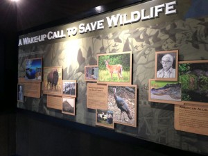A Wake Up Call to Save Wildlife