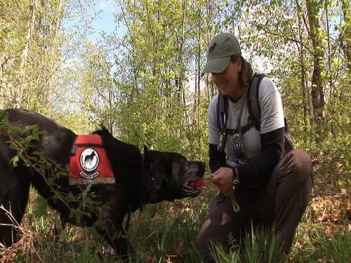 A detection dog team with Working Dogs for Conservation (Photo: The Wild Center)