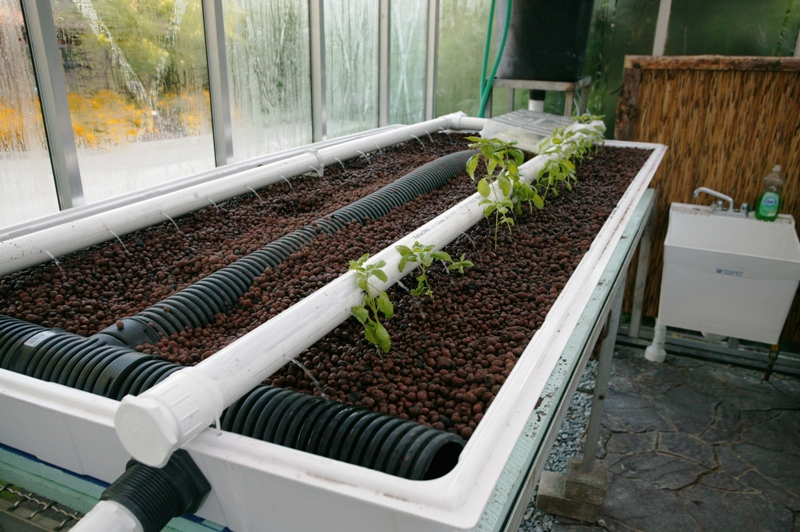 Lessons learned from a year of aquaponics cincinnati zoo for Aquaponics grow bed
