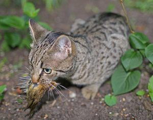 Cats allowed to free-roam outside kill billions of native and migratory birds every year.