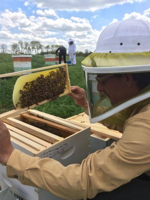 Checking on a beehive at EcOhio Farm