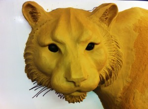 Close-up of tiger head