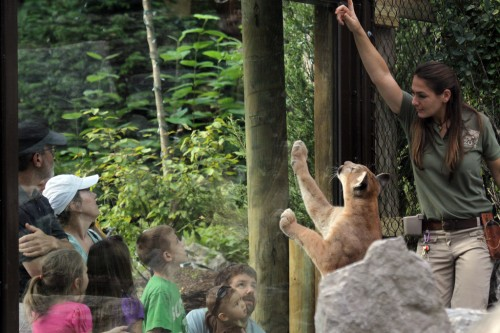 cougar_exhibit