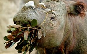 Eat Like An Animal - The Cincinnati Zoo & Botanical Garden