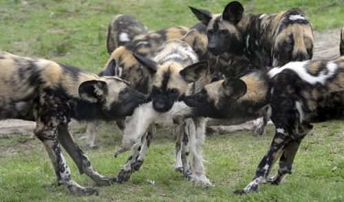 Carcass feeding