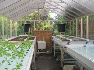 The aquaponics system in the Zoo's Greenhouse made possible by the Woodward Family Charitable Foundation.