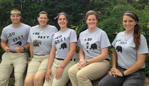 Cat Ambassador Program staff  #GoGrey!