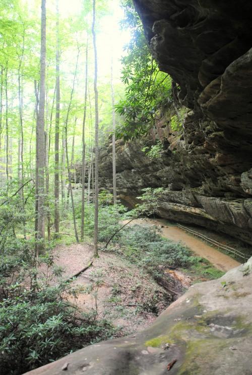Sandstone rock habitat of Cumberland sandwort