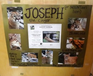 Joseph adoption poster in classroom