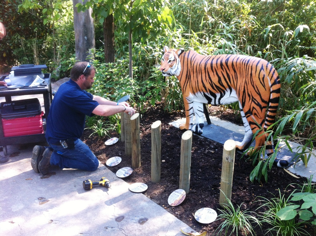 Installing interpretive signs in front of the tiger sculpture