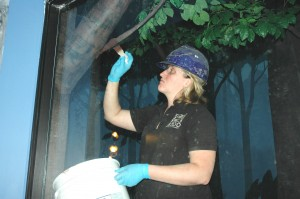 Touching up the tree branches in the vampire bat exhibit