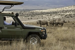 Rhinos on the Lewa Conservancy