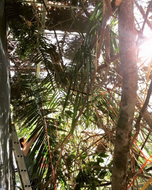 Can you find Monster here in her pre-release enclosure? (The Sloth Institute)