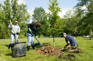 Mt. Airy tree planting (Photo: Scott Beuerlein)
