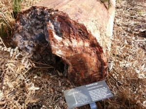 3. Where can you find this petrified log?