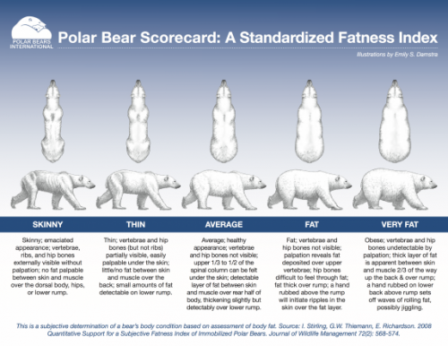Polar Bear Scorecard