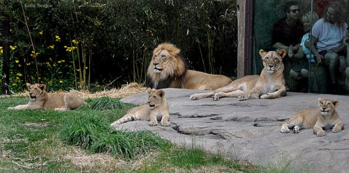 Our pride at rest (Photo: Kathy Newton)