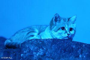 Sand cat in Night Hunters (Photo: DJJAM)