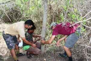 Setting up a camera trap outside Krishna Wildlife Sanctuary (www.fishingcat.org)