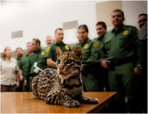 Sihil visits Harlingen Border Patrol to inform officers and promote sighting reports (Photo: Kelly Magnuson)