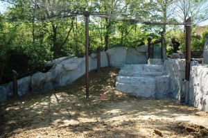 Snow leopard habitat in progress