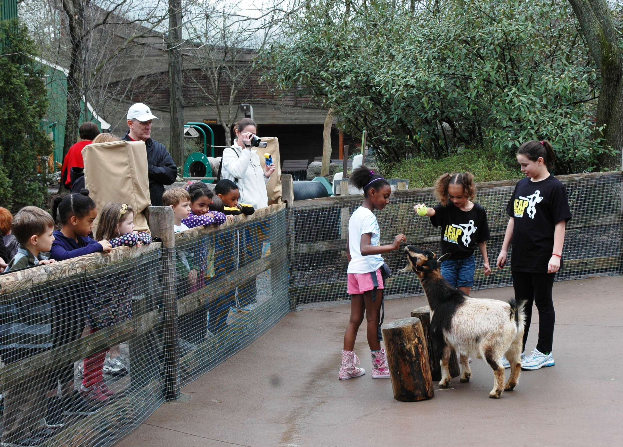 Our new animal trainers show off their goat-training skills to the younger campers.