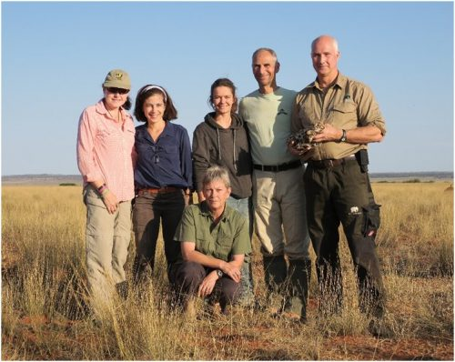 This year's team from left to right in back: Beryl Wilson (Zoologist at the McGregor Museum, Kimberley, South Africa), Dr. Anneke Moresco (post-doctoral scientist at CREW), Martina Küsters (field researcher and MTech candidate), Dr. Arne Lawrenz (Director at Wuppertal Zoo, Germany), Dr. Alex Sliwa (Curator at the Cologne Zoo, Germany). Front: Dr. Birgit Eggers (private wildlife veterinary specialist) (Photo credit Beryl Wilson)