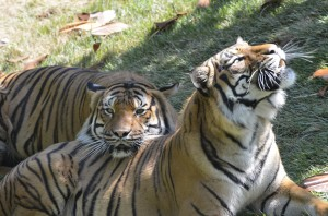 Taj and Who-Dey lounging in the sun (Photo: Michelle Curley)