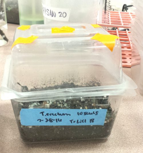 Trillium seeds were planted in soil boxes for germination