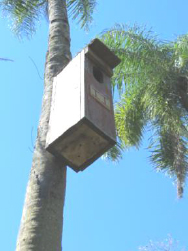 Nest box placed high up on the trunk of a palm tree
