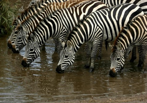 Witness the Great Migration with me in Tanzania this May.