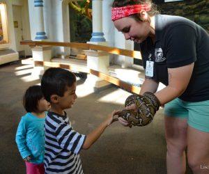 Snake encounter (Photo: Lisa Hubbard)