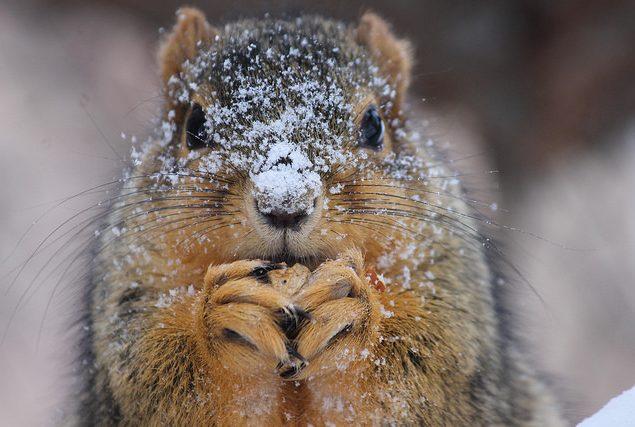 Squirrel in show (Photo: Corey Seeman)